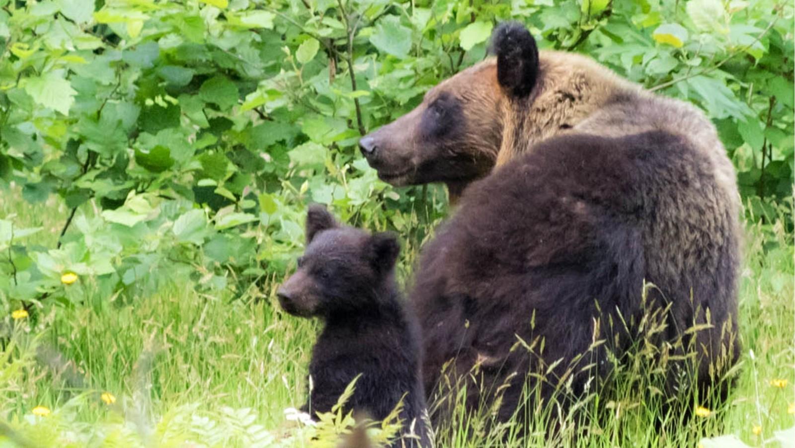 ゆとりろ洞爺湖 【熊牧場チケット付き】北海道旅行の定番!大迫力のヒグマを楽しむ<★スタンダード/会場食>