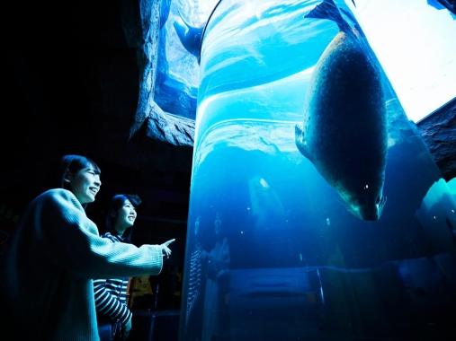 星野リゾート OMO7 旭川 / 【早割45 旭山動物園入園券付】Zooたび。(朝食付)