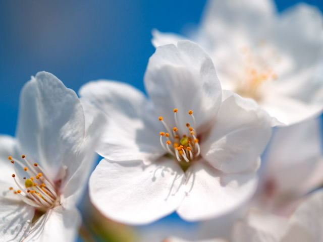 銀座グランドホテル / ◆春得◆春のご旅行に!ちょっぴり嬉しい選べる特典付き /素泊まり