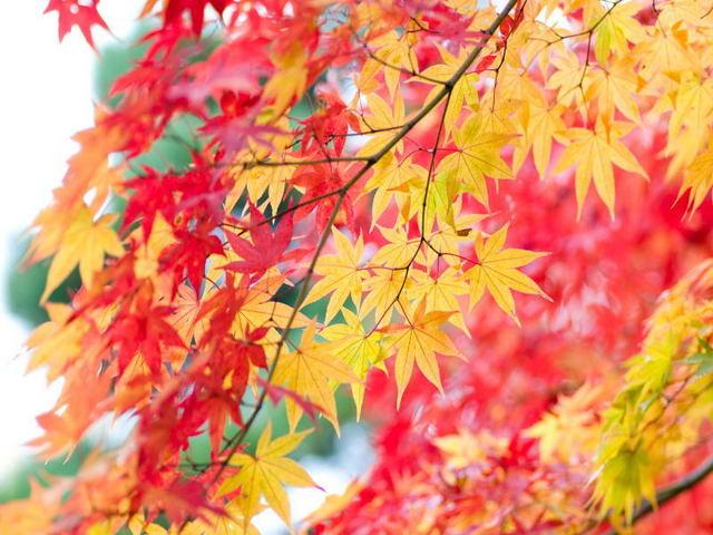 銀座グランドホテル / ◆秋得◆秋のご旅行に!ちょっぴり嬉しい選べる特典付き /素泊まり