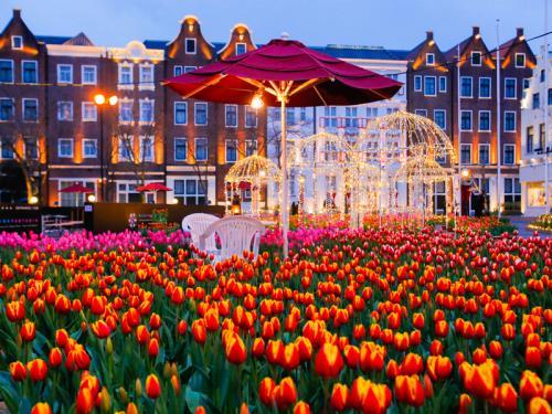 フォレストヴィラ / DP【ヨーロッパの街を鮮やかに彩る】100万本の大チューリップ祭プラン(朝食・パスポート・チューリップベア付)