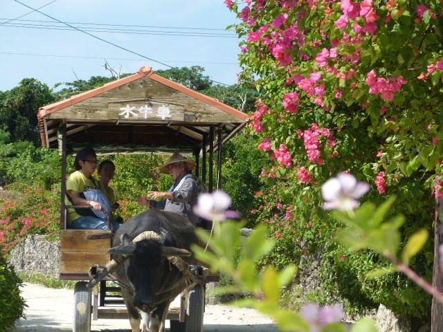 ホテルピースアイランド竹富島 / ドラマのロケ地を歩こう♪ 竹富観光センター水牛車付き