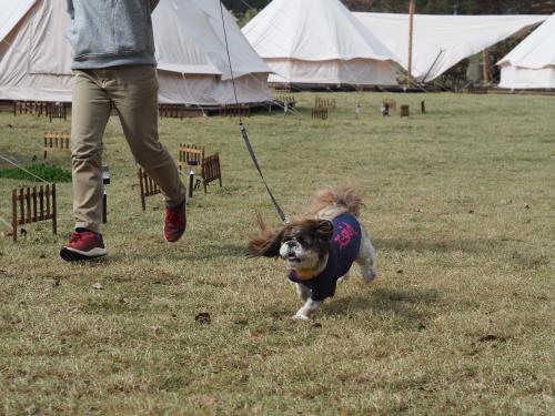 Nordisk Village Goto Islands / スタンダードプラン BBQコース with Dog (夕・朝食付き)