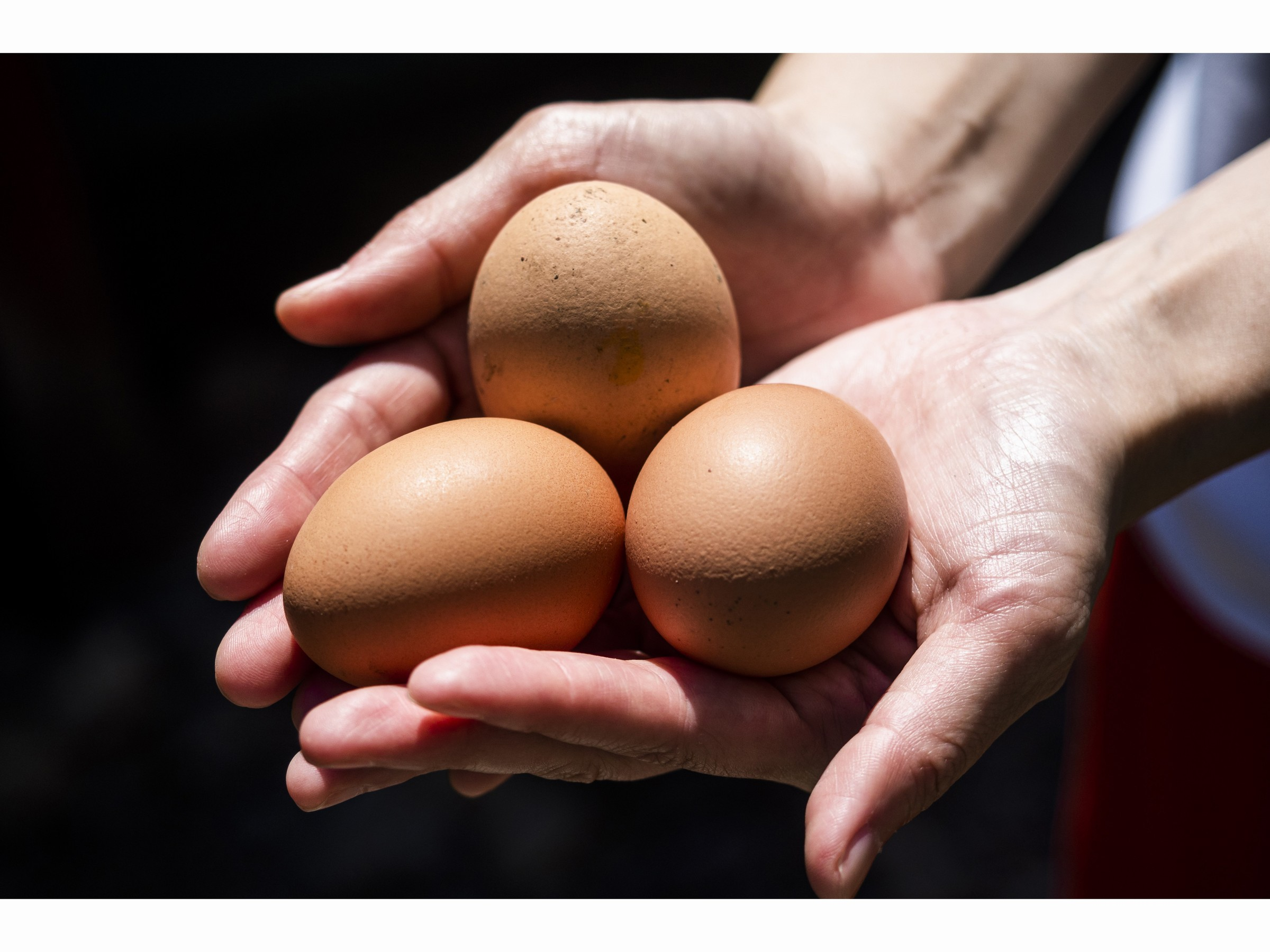 中札内農村休暇村 フェーリエンドルフ / <朝食付>休暇村名物!朝採れ卵を使った【卵かけごはん】の朝食セット