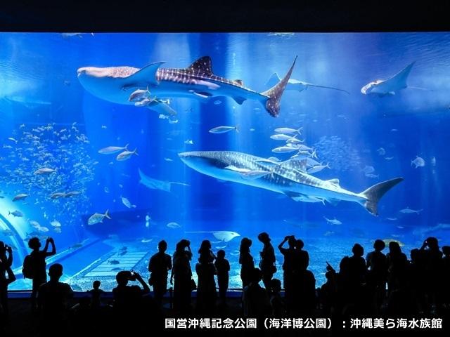 ホテルマハイナウェルネスリゾートオキナワ / 【水族館チケット付き】ホテルから車で6分、美ら海水族館を楽しもう!(朝食付)