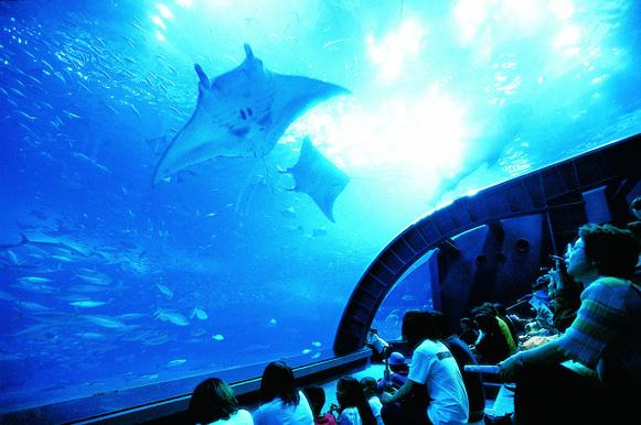 ホテルオキナワグランメールリゾート / 【美ら海水族館チケットプレゼント】沖縄の海の中を見てみよう♪感動体験を旅の思い出に☆朝食付