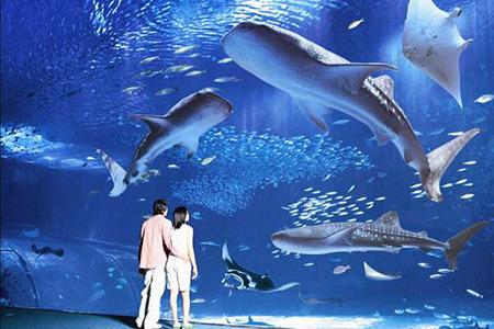 オキナワマリオットリゾート&スパ / 【美ら海水族館チケット付♪】沖縄の海、美しい魚たちの世界を一望。 <朝食付>