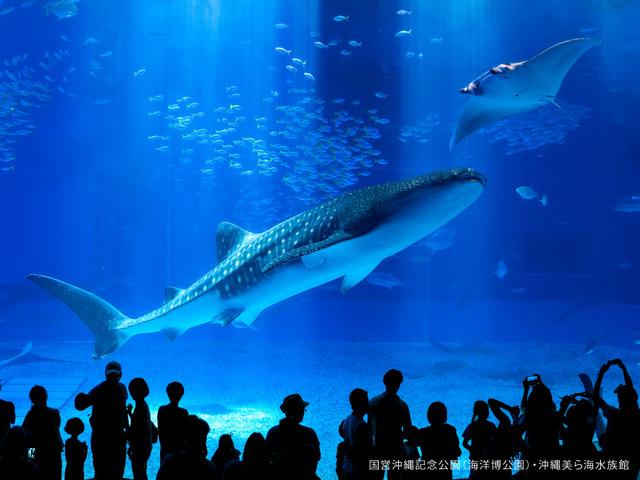 かねひで恩納マリンビューパレス / ◎【ファミリー・グループ歓迎】一度は行ってみて♪沖縄美ら海水族館チケット付☆彡(朝食付き)